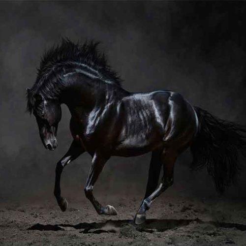 Fotografia Caballo Negro